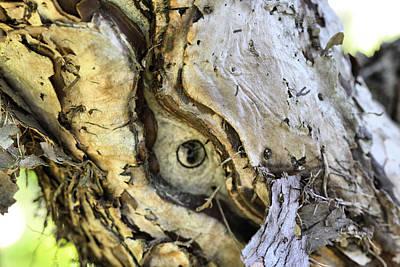 Birch Bark Photograph - Cantigny - 58 by Ely Arsha