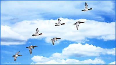 River Photograph - Canvasback Ducks In Flight by LeeAnn McLaneGoetz McLaneGoetzStudioLLCcom