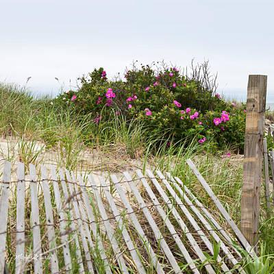 Cape Cod Beach Photograph - Cape Cod Beach Roses by Michelle Wiarda
