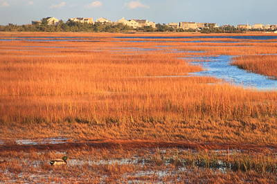 Cape Cod Salt Marsh Autumn Evening Print by John Burk