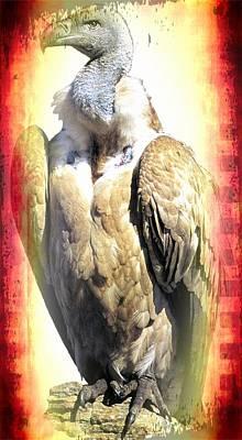Griffon Digital Art - Cape Griffon Vulture by Teresa  Peterson