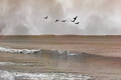 Cape Lookout Pelicans Print by Betsy Knapp