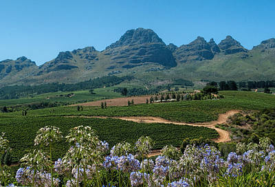 Cape Winelands - South Africa Print by Photos By Pharos