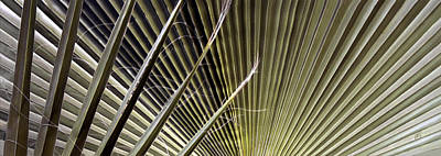 Captivation - Palm Leaf Print by Ben and Raisa Gertsberg