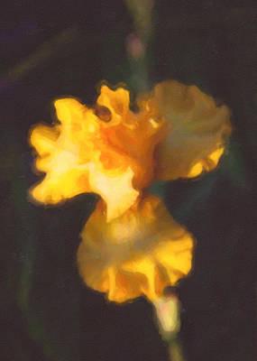 Mazama Mixed Media - Capturing Sunshine  by Omaste Witkowski
