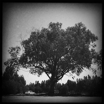 Alentejo Photograph - Car Parked Under A Tree by Marco Oliveira