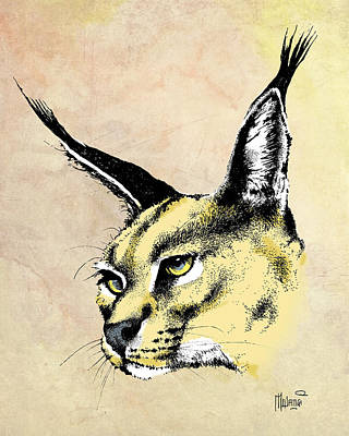 Cheetah Drawing - caracal Color by Anthony Mwangi