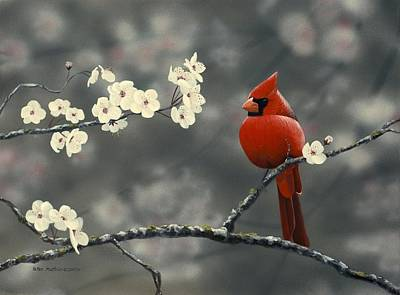 Cardinal And Blossoms Print by Peter Mathios