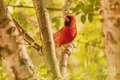Cardinal Digital Art - Cardinal Rules by Lois Bryan