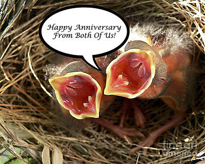 Photograph - Cardinals Anniversary Card by Al Powell Photography USA