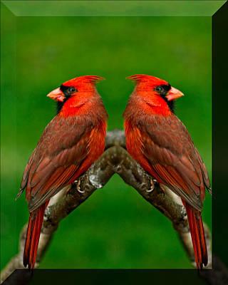 Song Photograph - Cardinals by LeeAnn McLaneGoetz McLaneGoetzStudioLLCcom