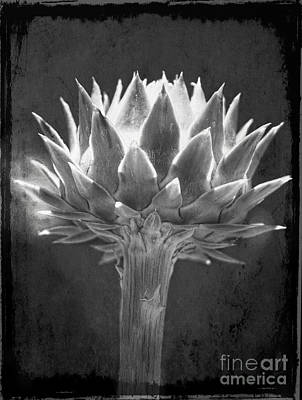 Artichoke Digital Art - Cardoon by Elena Nosyreva