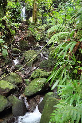 Caribbean Cruise - Dominica - 1212247 Print by DC Photographer