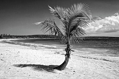 Caribbean, Puerto Rico, Vieques Print by Jaynes Gallery