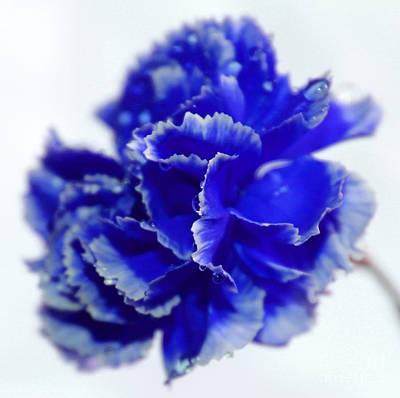 Blue Flowers Photograph - Carnation Blues by Krissy Katsimbras
