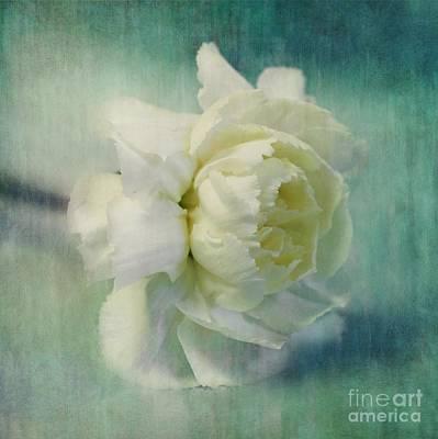 Blur Photograph - Carnation by Priska Wettstein