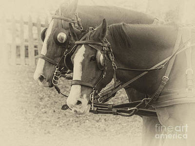 Carriage Horses I Print by Terry Rowe