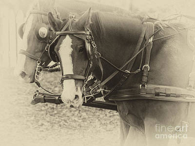 Carriage Horses II Print by Terry Rowe