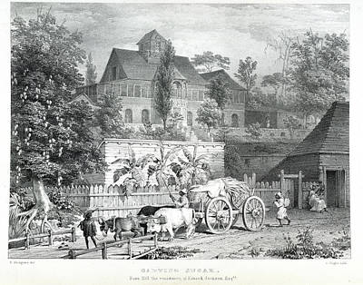 Carting Sugar Print by British Library