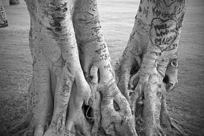 Carved Roots Print by Chris Ann Wiggins