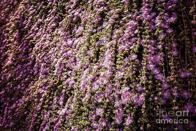 Photograph - Cascade Blooming Ivy by Sviatlana Kandybovich