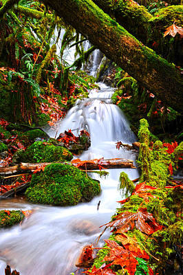 Cascade Creek Print by Randy Giesbrecht