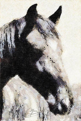 Horse Drawing - Casper by Greg Collins