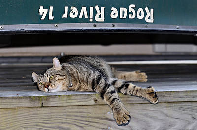 Cat And A Canoe Print by Susan Leggett