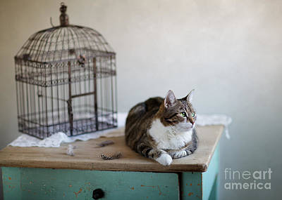 Cat And Bird Cage Print by Nailia Schwarz