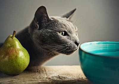 Cat And Pears Print by Nailia Schwarz