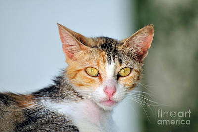 Portrait Photograph - Cat In Sifnos Island by George Atsametakis