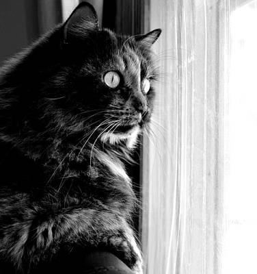 Cat Photograph - Cat In The Window by Megan Luschen