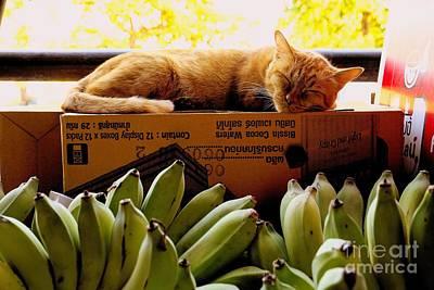 Cat Nap Print by Dean Harte