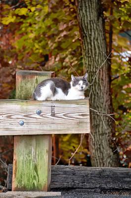 Kitten Digital Art - Cat On A Fence by Bill Cannon