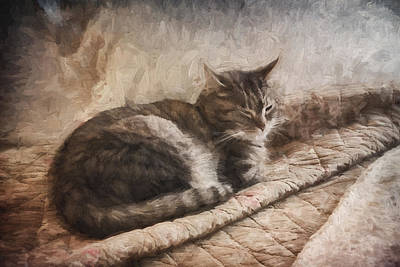 Asleep Digital Art - Cat On The Bed Painterly by Carol Leigh