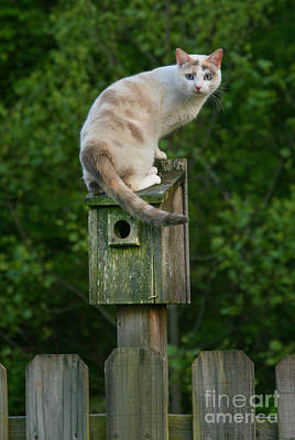 Cat Perched On A Bird House Print by Jt PhotoDesign