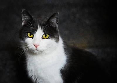 Cat Portrait With Texture Print by Matthias Hauser