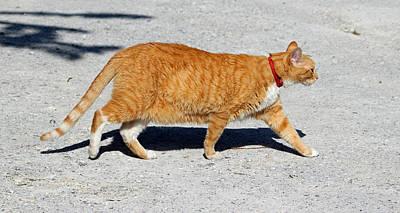 Friendly Digital Art - Cat Walk by Cynthia Guinn