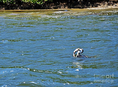 Genus Photograph - Catch Of The Day by Kaye Menner
