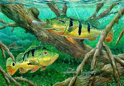 Bass Painting - Catching Peacock Bass - Pavon by Terry Fox