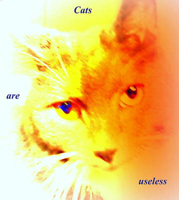 Cats Are Useless And So Are We  Original by Hilde Widerberg