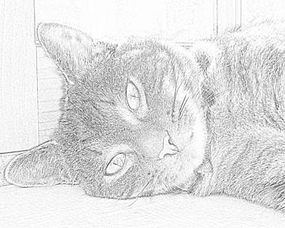 Paws Photograph - Cat's Eye by J D Owen