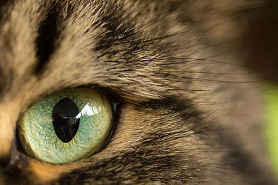 Green Eyes Photograph - Cat's Eye by Shane Holsclaw