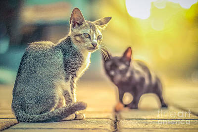 cat Original by Nuriyah