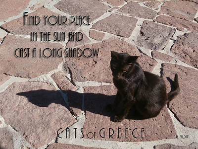 Photograph - Cats Of Greece #1 by J R Baldini M Photog CR