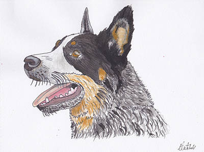 Cattle Dog Drawing - Cattle Dog by Amanda Mitchell