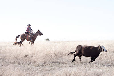 Working Cowboy Photograph - Cattle Drive by Cindy Singleton