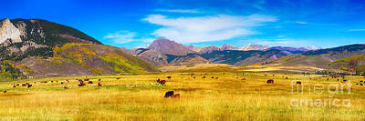 Cattle Grazing Autumn Panorama Print by James BO  Insogna