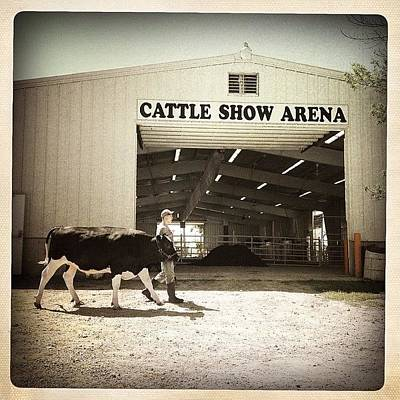 Cow Photograph - Cattle Show by Natasha Marco