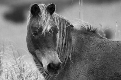 Shackleford Photograph - Caught My Eye by Betsy Knapp